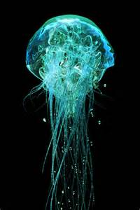what color are jellyfish neon jelly fish bright colors photo 17274687 fanpop