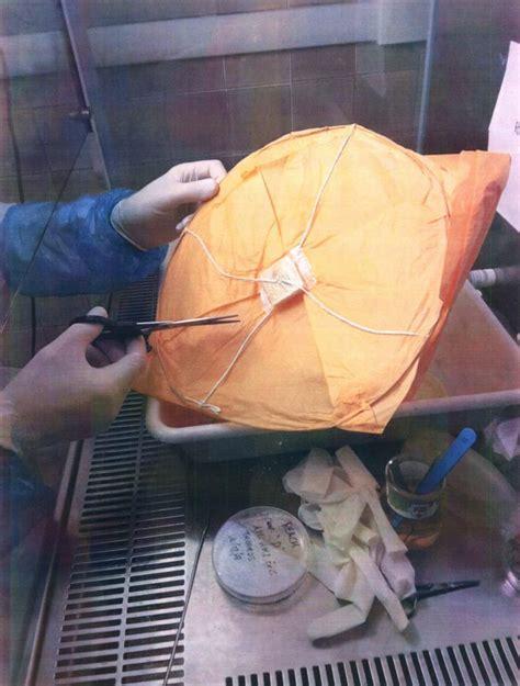 lanterne volanti roma lanterne cinesi volanti il ministero della salute dispone