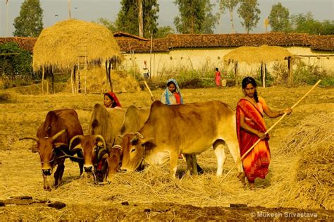 Changing Of Rural India Essay by Rural In India Essay