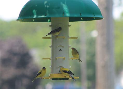 finch feeder hanger with hood thistle bird feeder
