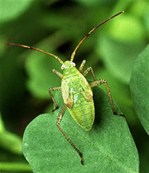 Cutter Backyard Bug Control Images Of Common Garden Pests Bugs And Natural Remedy