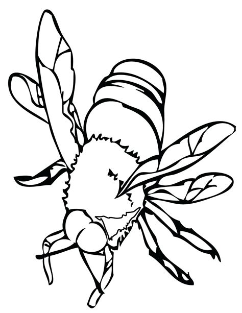 insect coloring pages insect coloring pages best coloring pages for