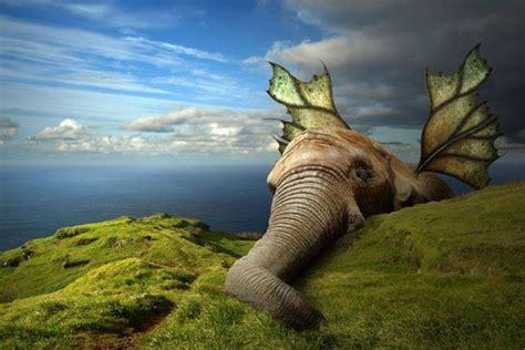 imagenes de rosas surrealistas 15 ilustraciones surrealistas de animales que te