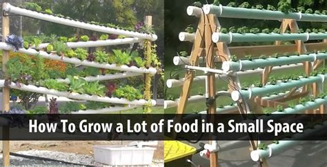 grow  lot  food   small space  diy hydroponic