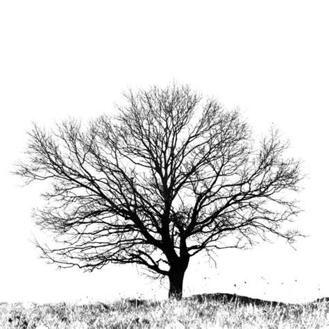 black and white tree images black and white tree print black and white tree