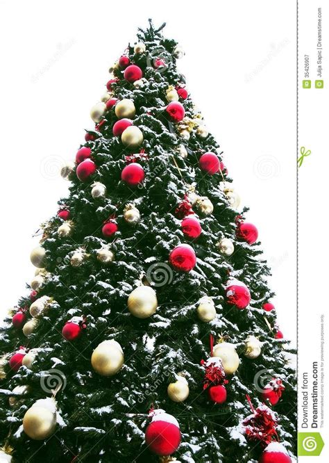 christmas tree outdoor stock image image of white