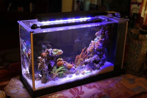 Fluval Spec Aquascape by Fluval Spec 5 Gallon Converted To Pico Reef Tank Aquaria