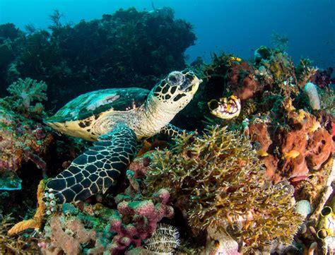 raja at dive sea turtle biology raja at biodiversity eco resort