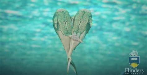 fecondazione interna fossili di pesci ossei riscrivono la storia