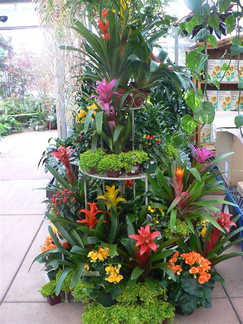 tropical houseplant display  cornell farms portland