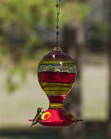 when should you put out hummingbird feeders home improvement