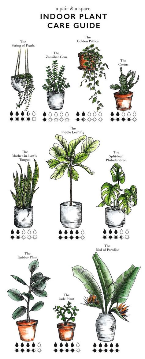 herb care chart plants indoor and plant care on pinterest