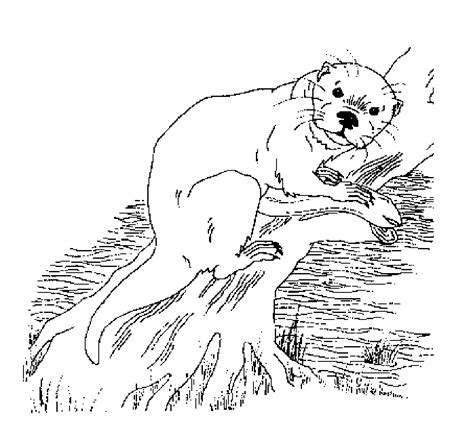 free coloring pages of otter