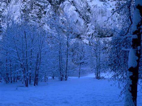 wallpaper blue forest 1024x768 blue forest desktop pc and mac wallpaper