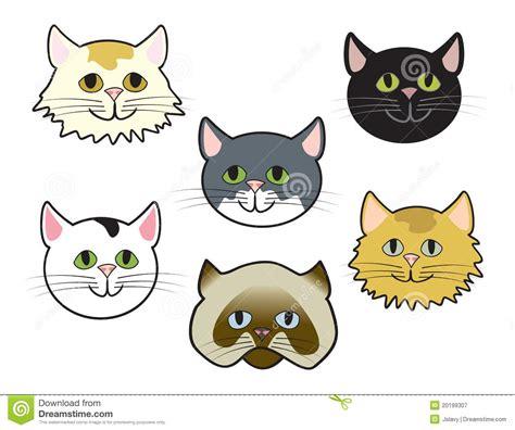 imagenes libres caras caras del gatito fotograf 237 a de archivo libre de regal 237 as