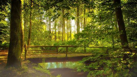 imagenes naturaleza relajante sonidos de la naturaleza y m 250 sica relajante m 250 sica de