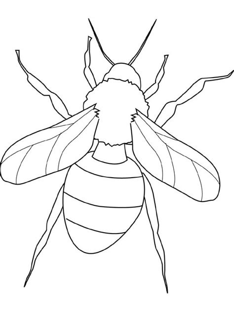 https www google com search q butterfly coloring pages