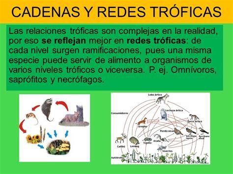 que son cadenas y redes troficas biosfera i los ecosistemas ppt video online descargar