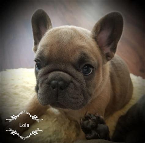 free puppies spokane view ad bulldog puppy for sale washington spokane usa