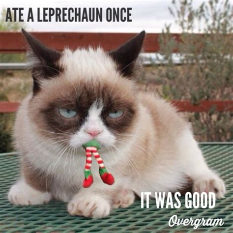 Talking Cat Meme - 30 best images about grumpy cat st patrick s day on