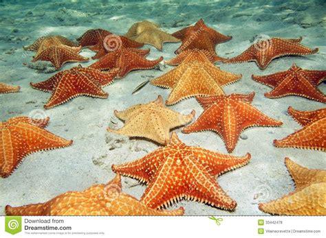 Design Your Floor Plan Free Sea Stars On Sandy Ocean Floor Royalty Free Stock Photos