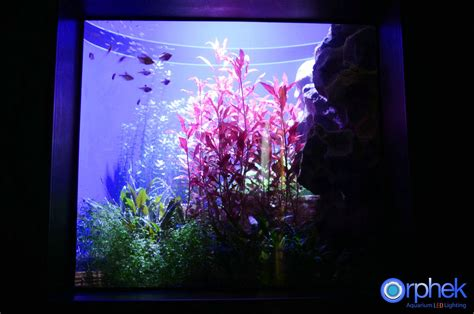 led aquarium lighting orphek
