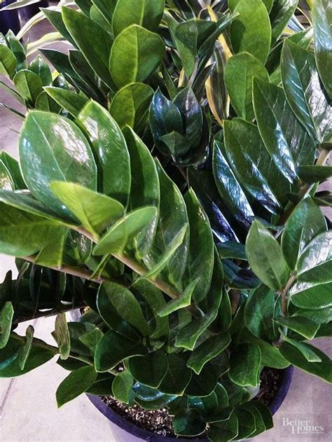 plants that do well in low light indoor plants for low light plants houseplant and indoor