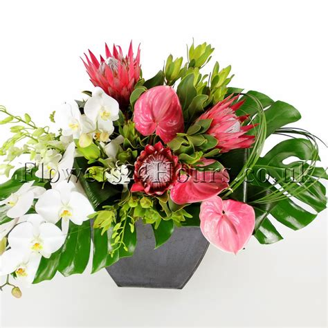 Subway Gift Card Balance Phone Number - orchids gifts uk gift ftempo