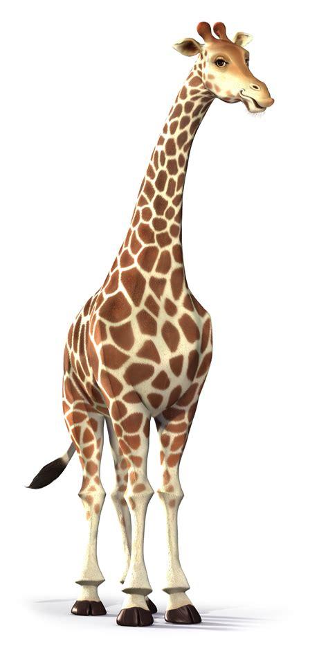 google images giraffe giraffe straight neck google search growth chart
