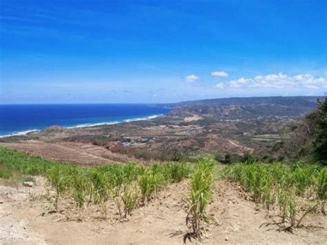 cherry tree hill barbados picture of barbados caribbean tripadvisor