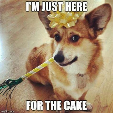 Birthday Cake Dog Meme - 17 best images about dog cake on pinterest cakes dog