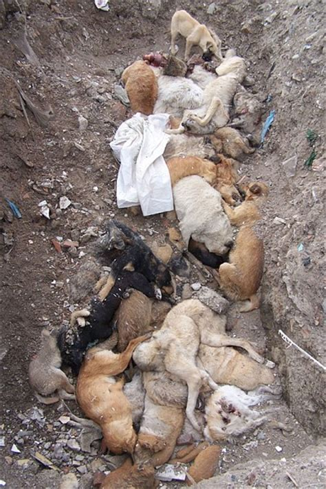 islam and dogs apparently poisoning dogs in spain isn t enough now muslims are attacking