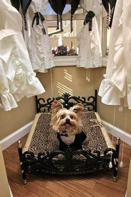 yorkie house miniature terrier a luxury house with a mortgage