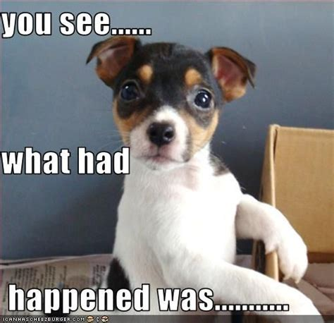 untitled cute puppy pictures funny dog pictures cute