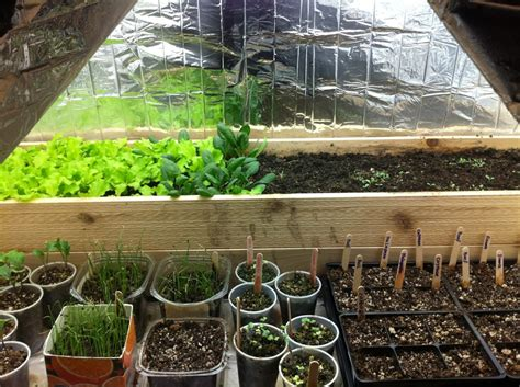 orchids garden society grow tents  indoor gardens