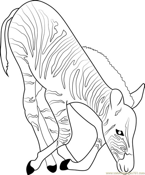 coloring page of lemongrass zebra eating grass coloring page free zebra coloring