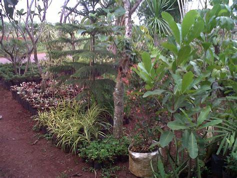 taman tanaman hias kolam batu alam saung  gazebo