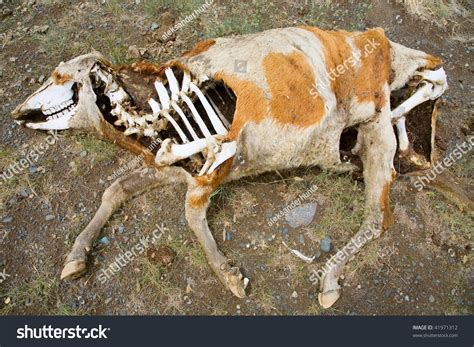 Search For Dead Dead Animals Images Search