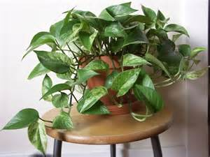 Easy Houseplants 15 Best Houseplants For Beginners Balcony Garden Web