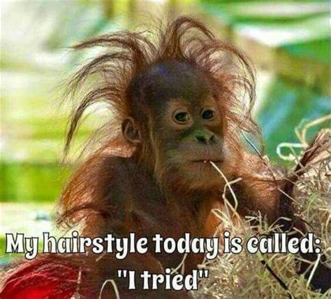 bad hair days a 0993070922 the 25 best bad hair day meme ideas on bad hair day funny funny cat pictures and