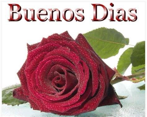 imagenes rosas rojas de buenos dias im 225 genes con frases para dar los buenos d 237 as feliz d 237 a