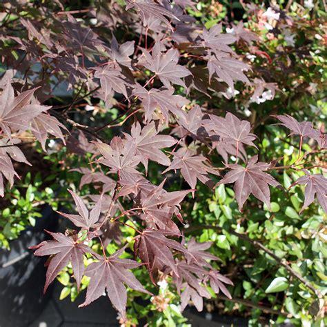 Japangarten Pflanzen by Pflanzen F 252 R Japangarten Neue Garten Pflanzen F R Einen