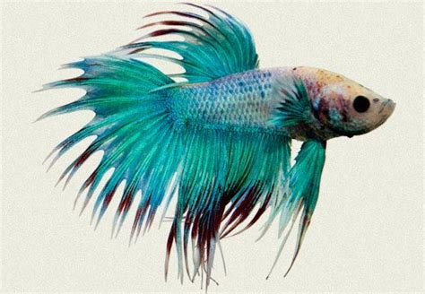 Sicher Ecosystem Moon Air Purifier 55 best images about pet fish on tropical fish siamese fighting fish and betta