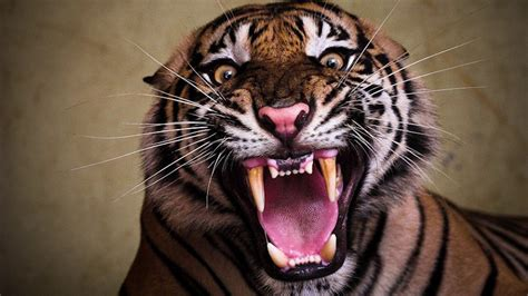 tiger roar sound youtube