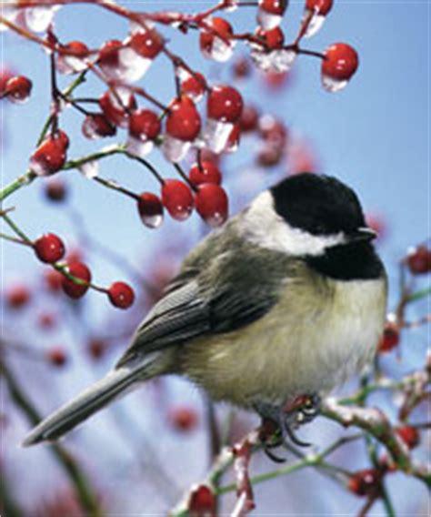 Window Nest Box - roaring fork audubon winter bird feeding