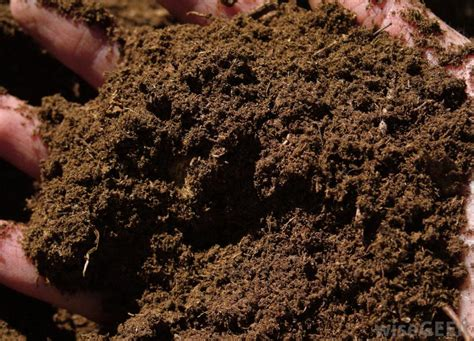 what is soilless mix with pictures