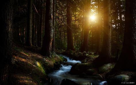 darkness beautiful dark themes 美丽的森林图片