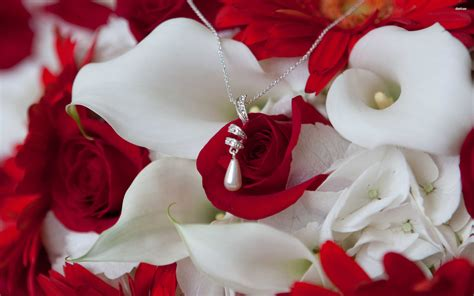 wallpaper 4k rose red roses wallpapers hd a20 hd desktop wallpapers 4k hd