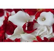 Red Roses Wallpapers HD A20  Desktop 4k