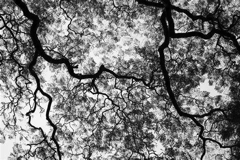 white tree black and white trees new calendar template site